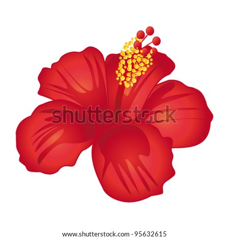 Beautiful red hibiscus flower. Vector illustration.