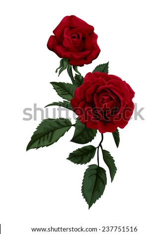 Beautiful red rose isolated on white.  Perfect for background greeting cards and invitations of the wedding, birthday, Valentine's Day, Mother's Day. - stock vector
