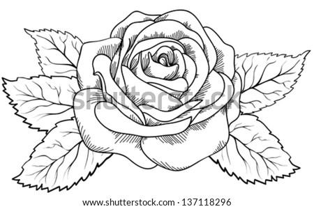 Rose Drawing Outline Wwwimgarcadecom Online Image