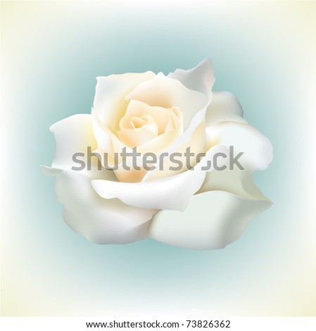 Beautiful single white vector rose - stock vector