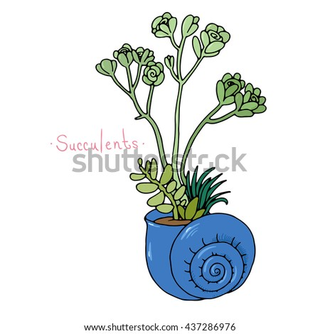 Beautiful succulent plants in a shell. Hand drawing isolated objects on white background. Vector illustration.