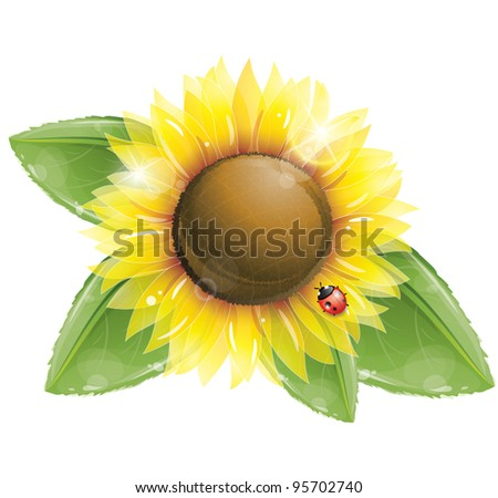 Beautiful sunflower and green leaves isolated on white, vector illustration, eps-10 - stock vector