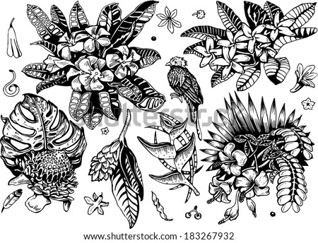 Beautiful Tropical Plants 2 Collection (black&white Vector EPS10 Doodles) - stock vector