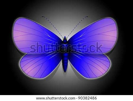 Beautiful Vector Butterfly Illustration - stock vector