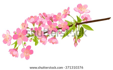 Beautiful Vector Cherry Blossom Branch - Japanese Traditional Eve. Sakura Flower Beauties. Floral Pink Colored Springtime Nature Decoration Design. - stock vector