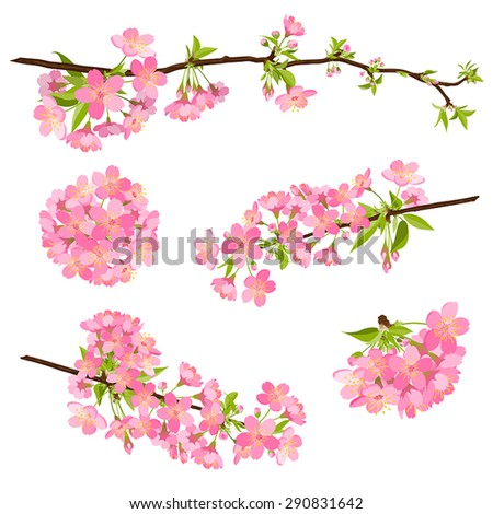 Beautiful vector cherry blossom branches. Spring, floral, pink, beauty. - stock vector