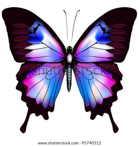 Beautiful vector isolated blue butterfly - stock vector