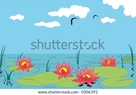 Beautiful water lilly. Vector illustration - stock vector