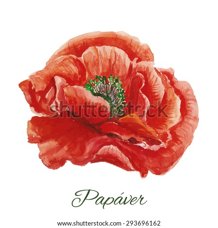 Beautiful watercolor paint red poppy. Vector illustration.  - stock vector