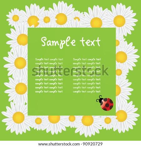 Beautiful white daisy isolated on white. vector illustration - stock vector