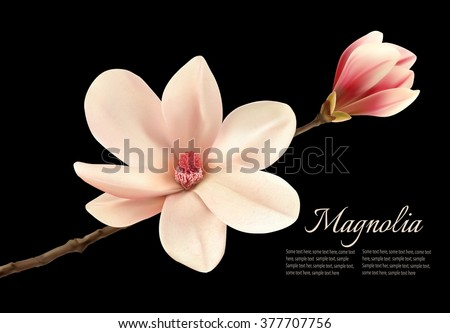 Beautiful white magnolia flower isolated on a black background. Vector. - stock vector