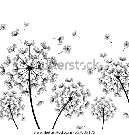 Beautiful White Nature Background With Black Dandelions And Flying Fluff Floral Stylish Trendy Wallpaper