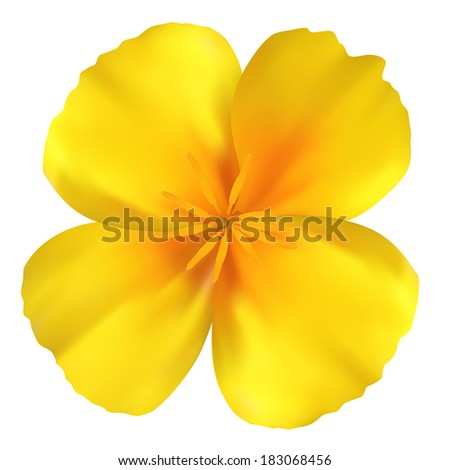 Beautiful yellow flower. Isolated on white. Vector illustration - stock vector