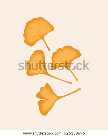 Beautiful yellow ginko leaves, detailed vector illustration