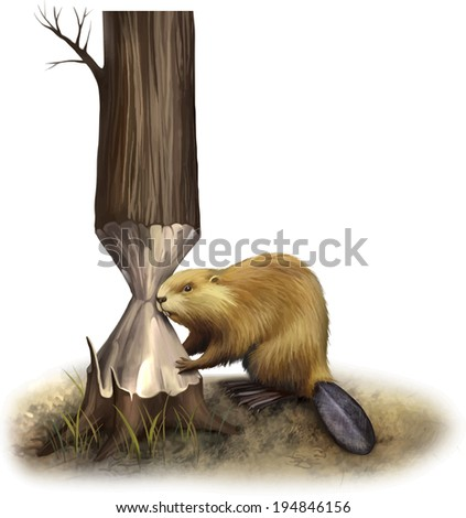 Beaver eating tree, gnawing. Illustration isolated on white - stock vector