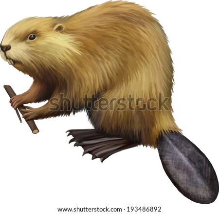 Beaver holding tree branch. North American Beaver, Illustration isolated on white - stock vector