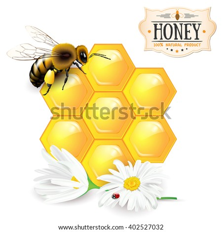 Bee, honeycomb, daisies and honey label - vector illustration - stock vector