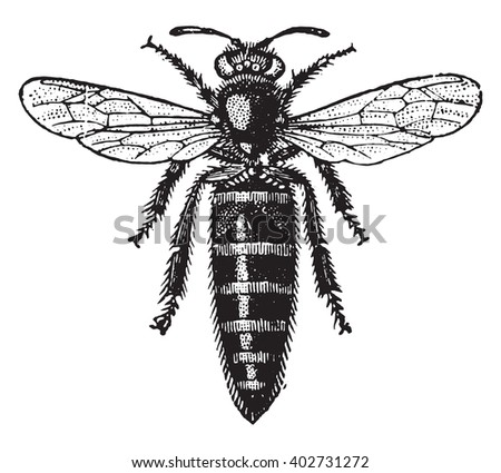 Bee mother, vintage engraved illustration. Industrial encyclopedia E.-O. Lami - 1875.