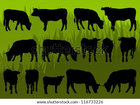 Beef cattle and cow detailed silhouettes illustration collection background vector - stock vector