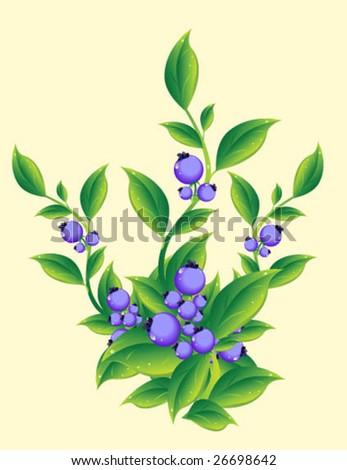 Berries - stock vector