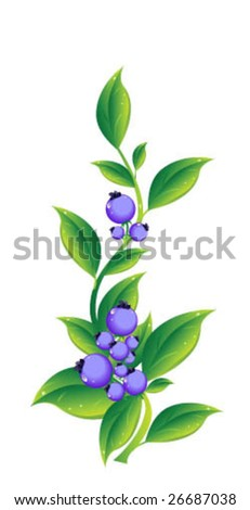 berry - stock vector