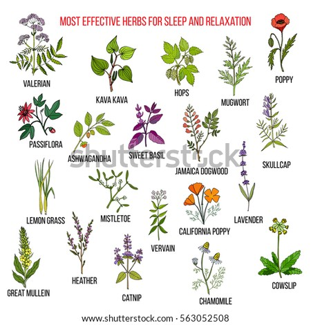 Best Herbal Remedies Sleep Relaxation Hand Stock Vector