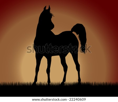 Best of the arabian horses, so beautiful and hardy, over wonderful sunrise. - stock vector