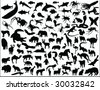 big animal collection vector - stock vector