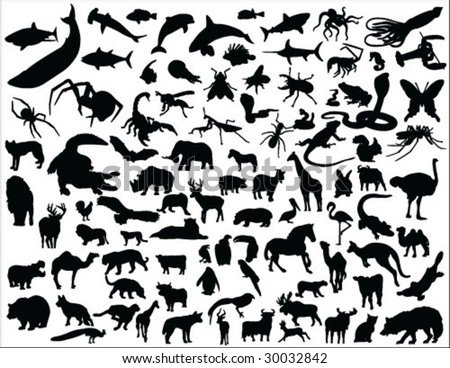 big animal collection vector