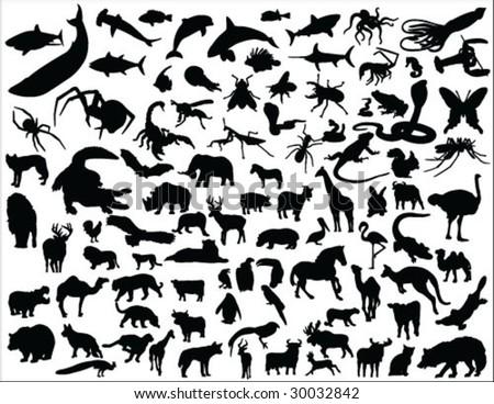 big animal collection vector - stock vector