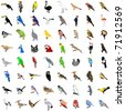 Big collection of birds. Vector - stock vector
