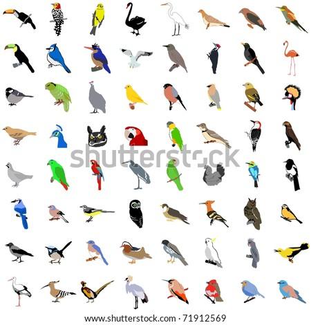 Big collection of birds. Vector - stock vector