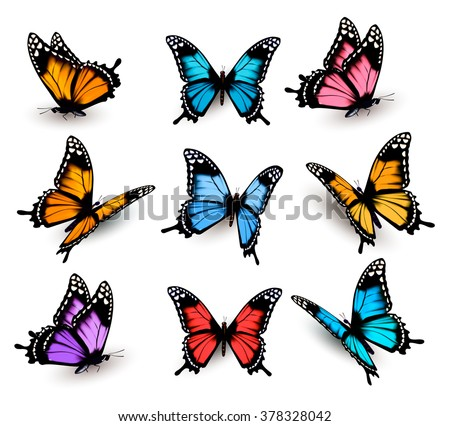 Big collection of colorful butterflies. Vector - stock vector
