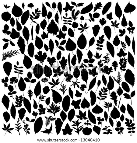 Big collection of different vector leafs