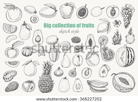 Big collection of fruits on white background. Vector  illustration for your design