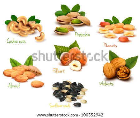 Big collection of ripe nuts. Vector. - stock vector