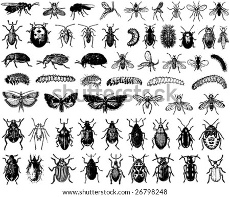 big collection of vector insects - stock vector