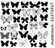 Big collection silhouette black butterflies for design isolated on white (vector) - stock photo