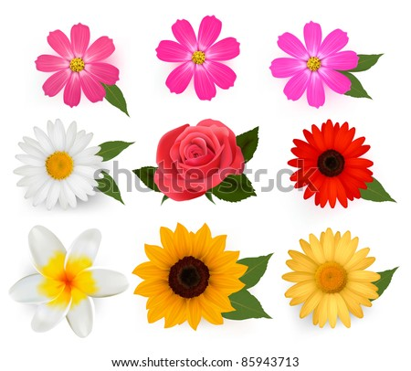 Big set of beautiful colorful flowers. Vector illustration. - stock vector