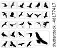 big set of birds vector - stock vector