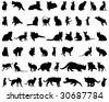 Big Set of Cats Silhouettes in Different Poses. Almost Each Kind of Cat Animal Represented in Set. High Detail, Very Smooth. Vector Illustration.  - stock vector