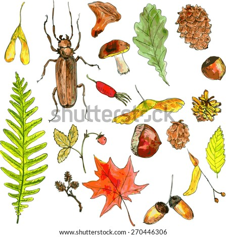 big set of  forest objects drawing by watercolor, seeds, leaves, twigs, pine cones, hand drawn vector illustration - stock vector