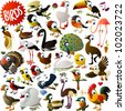 big vector birds set - stock photo