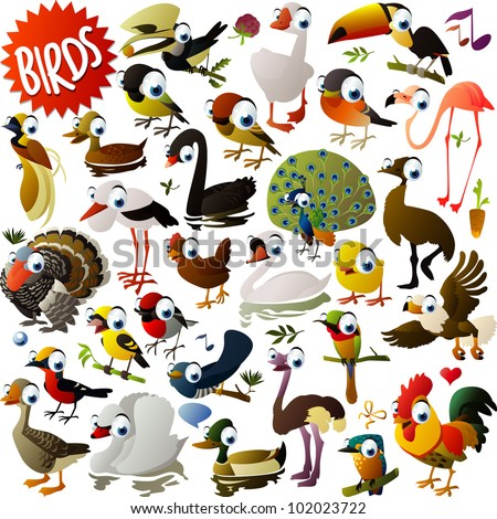 big vector birds set - stock vector