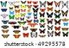 big vector collection of butterflies - stock vector