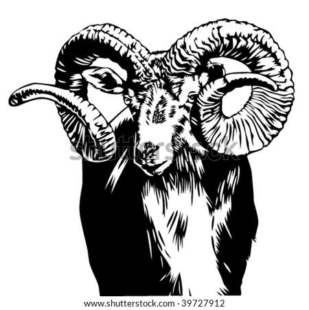 bighorn sheep vector illustration - stock vector