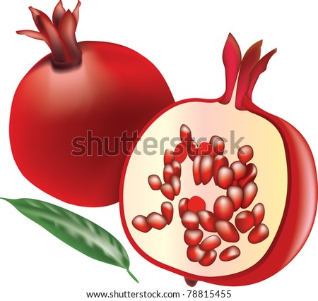 bio pomegranate - stock vector