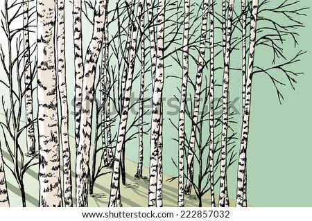 birch grove - stock vector