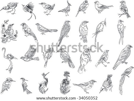 bird collection - stock vector