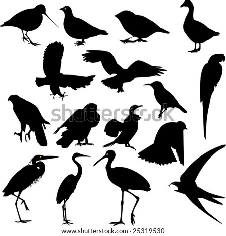 bird collection - vector - stock vector